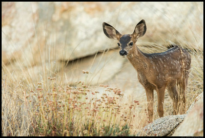 Bold little fawn comes in for a closer look