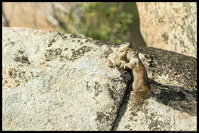 Ninja squirrel utilizes the four finger death mask grip to subdue his opponent before scampering off.